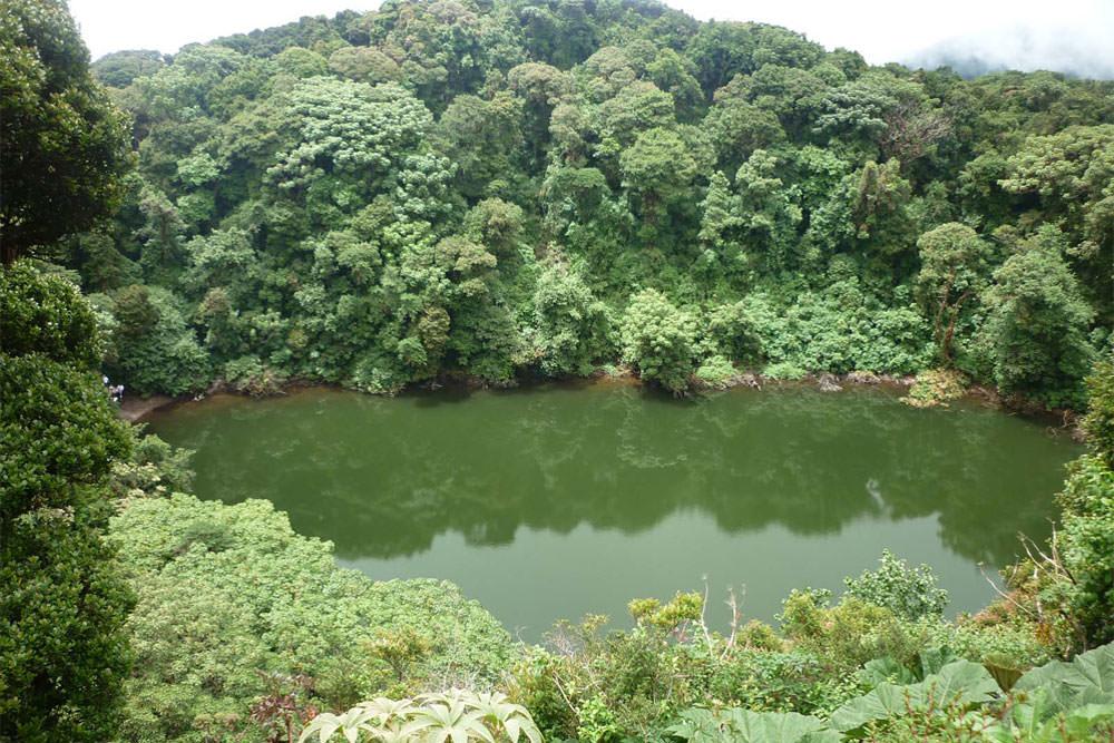 Bosque Lluvioso del Caribe