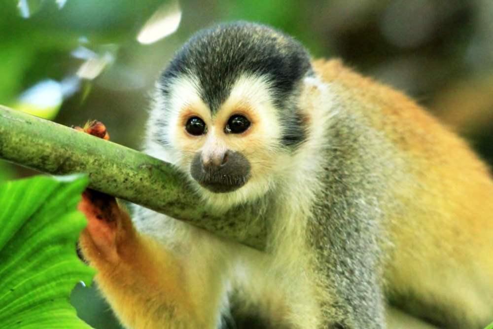 Gran Variedad de Monos en Costa Rica